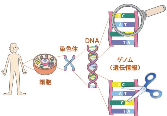 全 ファンド 株式 グローバル ゲノム 生物